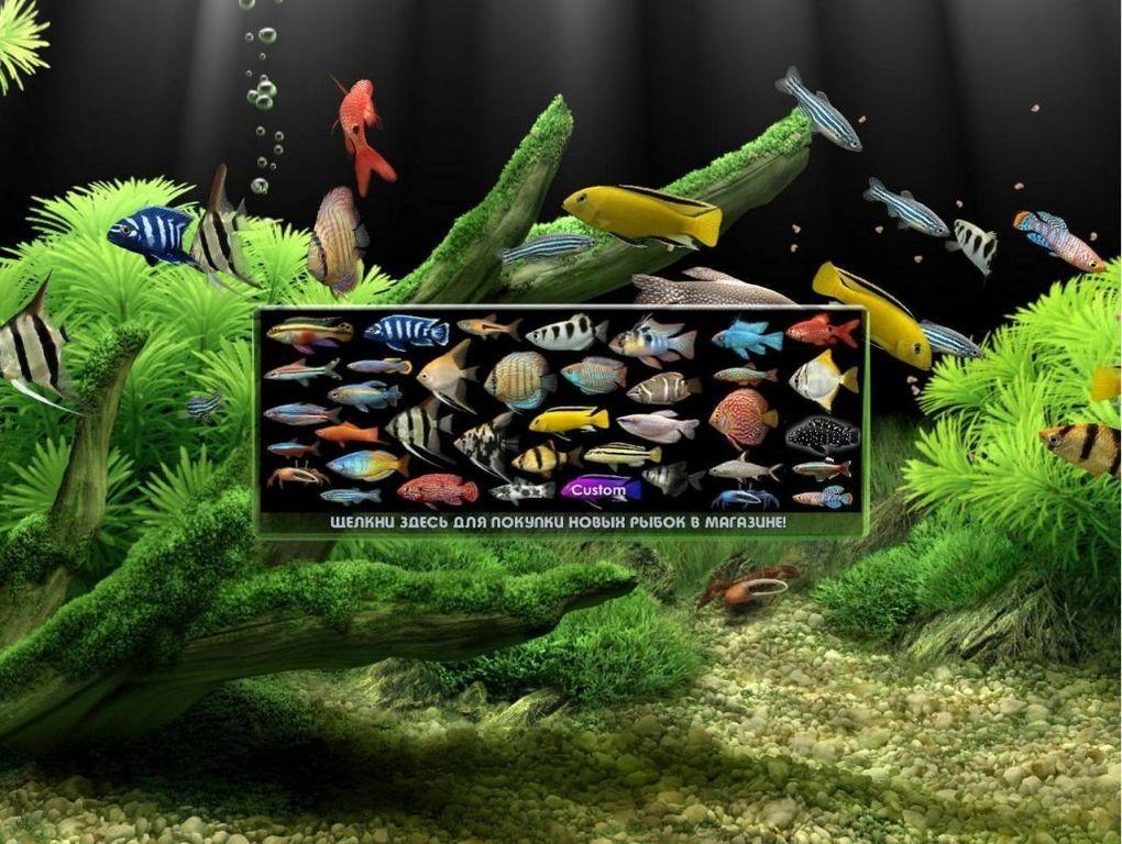 Живые обои на андроид рыбки скачать бесплатно 4